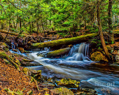 Photograph - Woodland Stream And Falls by Nick Zelinsky