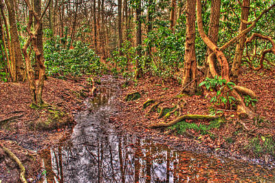Photograph - Woodland Stream by Chris Day
