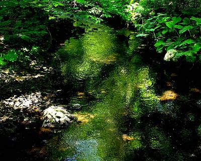 Photograph - Woodland Stream by Cliff Wilson