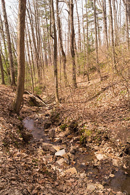 Photograph - Woodland Stream In The Mountains In Spring by MM Anderson