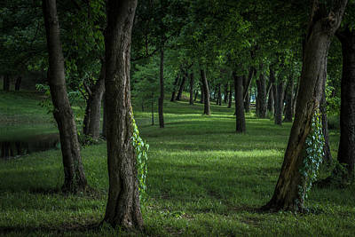 Photograph - Woodland Stroll by James Barber
