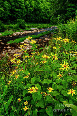 Photograph - Woodland Sunflower And Williams River by Thomas R Fletcher