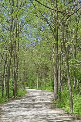 Sean - Woodland Trail by Ann Horn