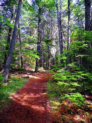 Photograph - Woodland Trail by Joe Duket