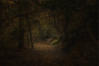 Print featuring the photograph Woodland Walk by Ryan Photography