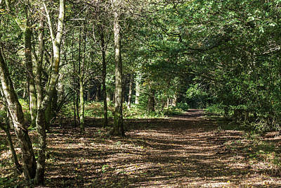 Photograph - Woodland Walk by Wendy Cooper