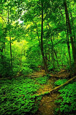Woodland Way Art Print