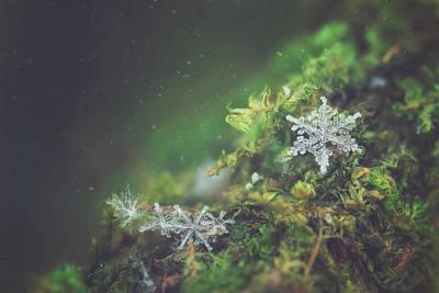 Carrie Ann Moss Photograph - Woodland Winter by Carrie Ann Grippo-Pike