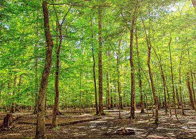 Photograph - Woodlands by John M Bailey