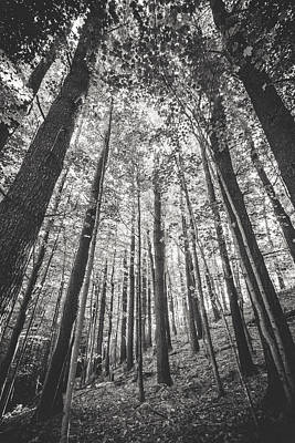 Photograph - Woodlands by Robert Clifford