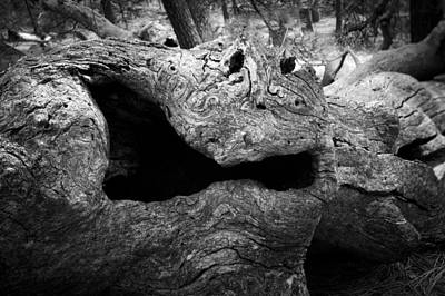 Photograph - Woodmonster by Alexander Kunz