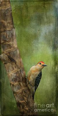 Linda King Digital Art - Woodpecker #1 Painted And Textured by Linda King