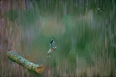 Photograph - Woodpecker Etc#h4 by Leif Sohlman