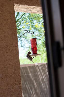Painting - Woodpecker Having A Drink by Carolina Liechtenstein