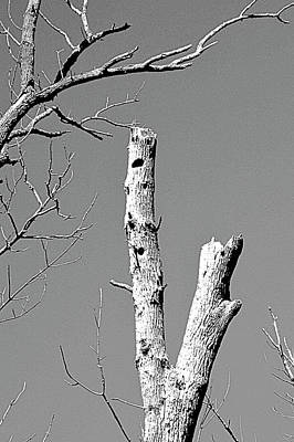 Photograph - Woodpecker Holes by Randy J Heath