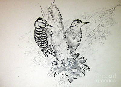 Drawing - Woodpecker by Jason Sentuf