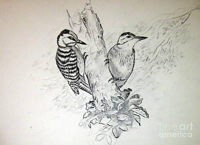 Drawing - Woodpecker by Jason Sentuf