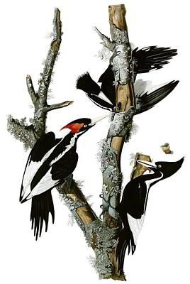 Woodpecker Art Print by MotionAge Designs