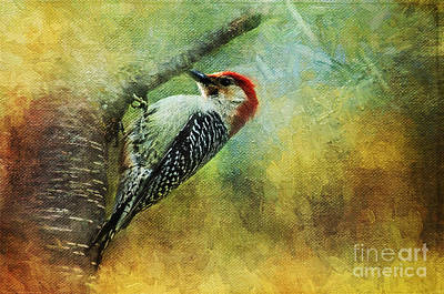 Woodpecker On Cherry Tree Art Print