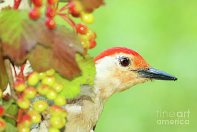 Photograph - Woodpecker Peeking Out by Max Allen