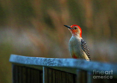 Photograph - Woodpecker Perch by Tom Claud