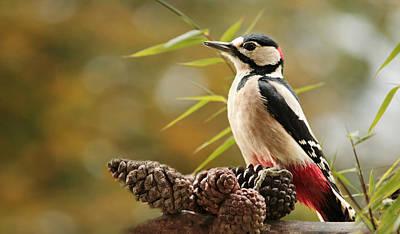 Woodpecker Photograph - Woodpecker Portrait by Heike Hultsch