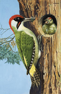 Feeding Young Painting - Woodpecker by RB Davis