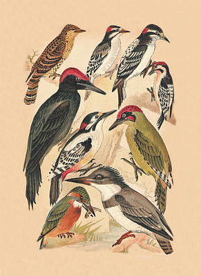 Woodpecker Mixed Media - Woodpeckers And Others by Eric Kempson