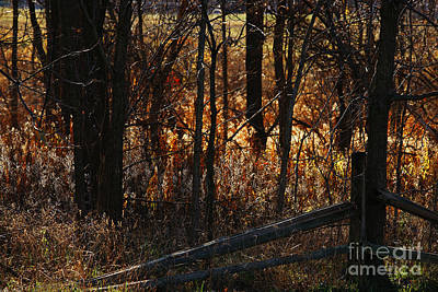 Photograph - Woods - 1 by Linda Shafer