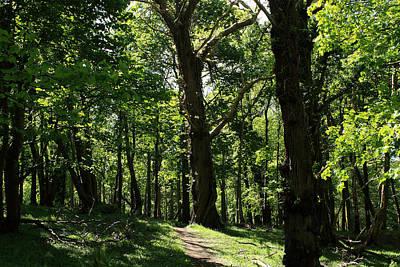 Photograph - Woodlands by Aidan Moran