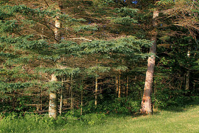 Photograph - Woods And Trees by Bonnie Follett
