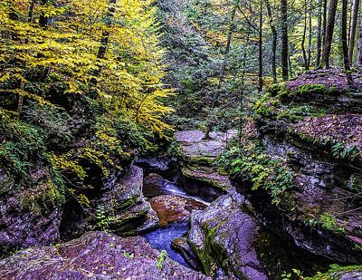 Photograph - Woods Below Adams Falls by Nick Zelinsky