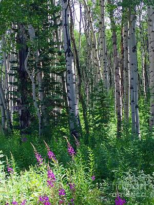 Photograph - Woods by Beth Saffer