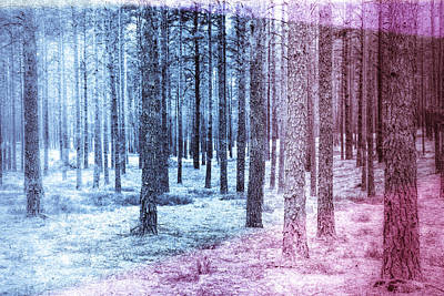 Photograph - Woods Cold by Olivier De Rycke