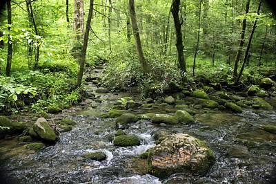 Photograph - Woods - Creek by Nikolyn McDonald