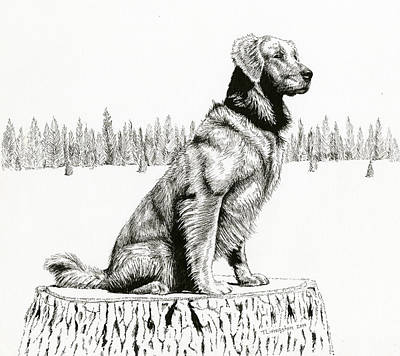 Drawing - Woods Dog by Timothy Livingston