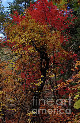 Photograph - Woods In Oak Creek Canyon, Arizona by Frank Stallone