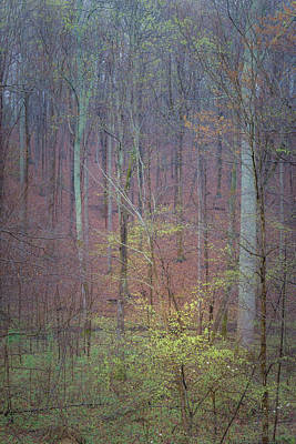 Dogwood Photograph - Woods In Rain by Joseph Smith