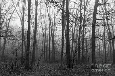 Photograph - Woods In The Fog Grayscale by Jennifer White