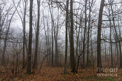 Photograph - Woods In The Fog by Jennifer White