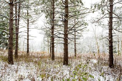 Woods In Winter 2 At Retzer Nature Center  Art Print