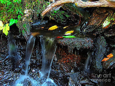 Photograph - Woods Stream by Mim White