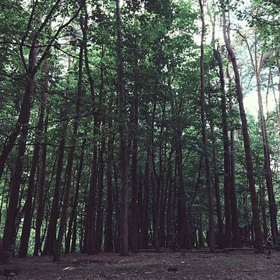 Warwickshire Photograph - #woods #woodland #trees #nature by Emma Gillett