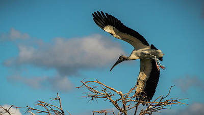 Photograph - Woodstork In Flight Delray Beach Florida by Lawrence S Richardson Jr