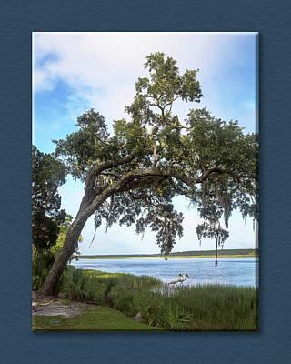 Photograph - Woodstorks At Oak Grove Island by Jim Ziemer