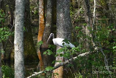 Photograph - Woodstorks Swamp by Kathy Gibbons