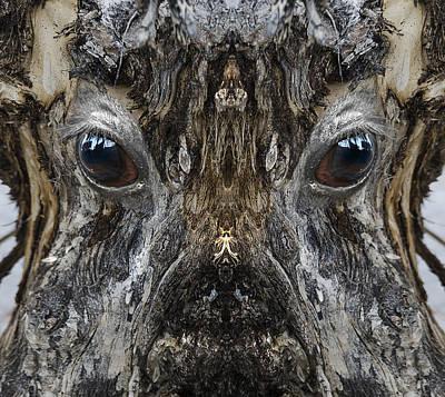 Pareidolia Wall Art - Digital Art - Woody 187 by Rick Mosher