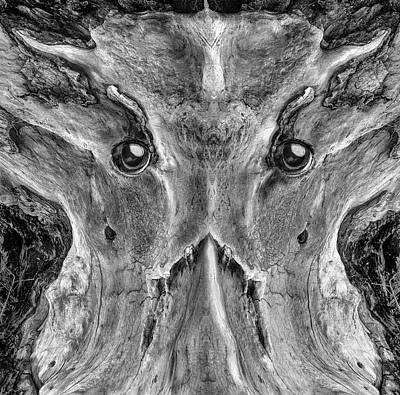 Photograph - Woody 218 Bw by Rick Mosher