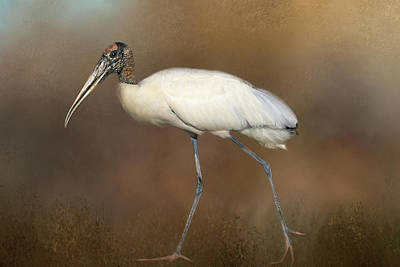 Stork Photograph - Woody by Donna Kennedy