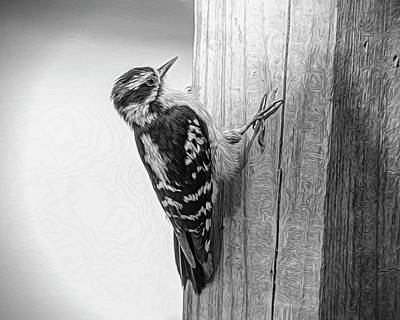 Photograph - Woody In Black N White by Cathy Kovarik